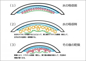 ケラチンの膨張と収縮